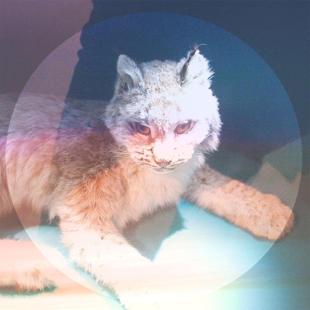 Simian Ghost - Lovelorn EP - EP Cover Art